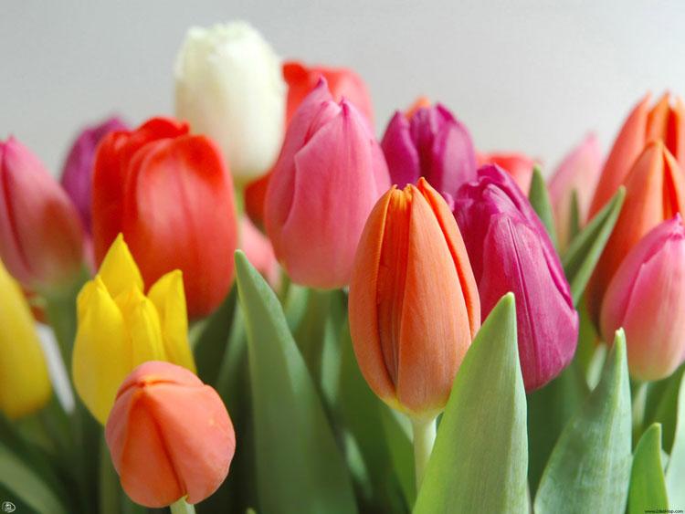 8marta flowers
